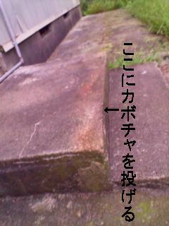 kabotyasu-pu(3
