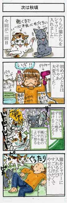 猫のシャワー