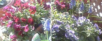 20060405花1