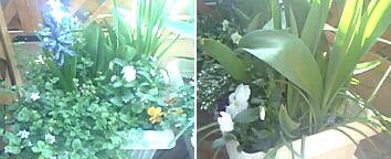 20060405花2