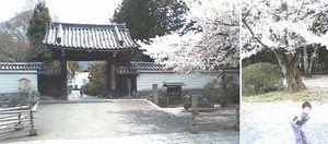 20070409花見