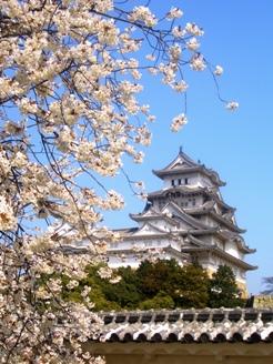 姫路城With桜
