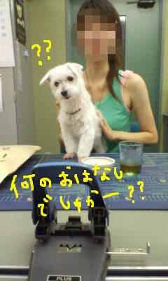 20070809155803.jpg