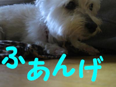 IMG_2015.jpg
