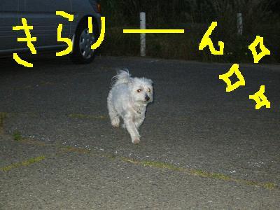 IMG_2133.jpg