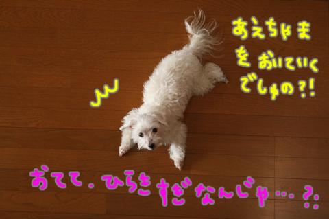 IMG_3256.jpg