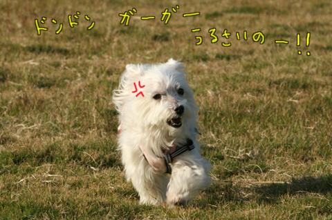 IMG_4305.jpg