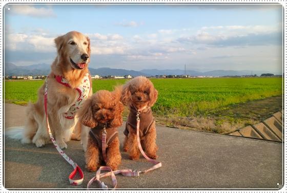 2011,11,23お散歩16
