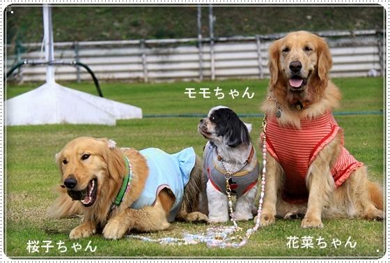 2011,11,25花菜ちゃんのお誕生日