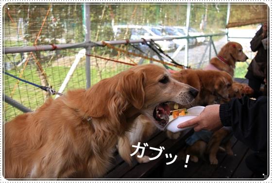 2011,11,26お誕生会オフ10