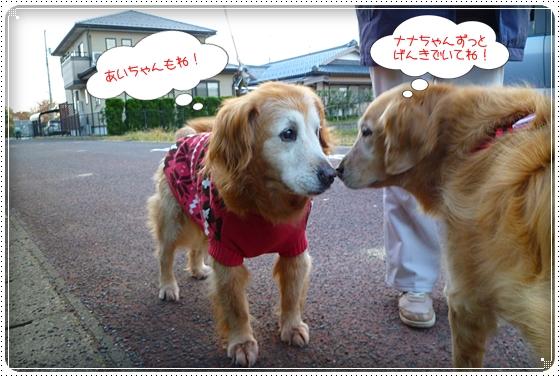 2011,11,27お散歩4