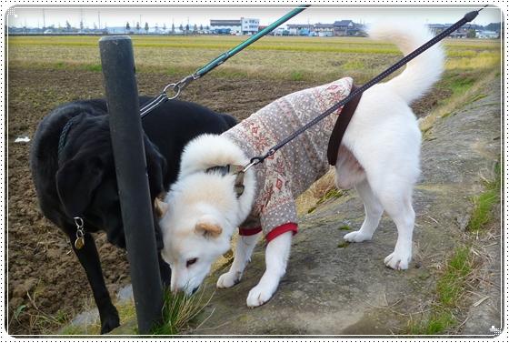 2011,11,27お散歩2