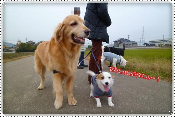 2011,11,28お散歩2