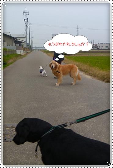 2011,11,28お散歩7
