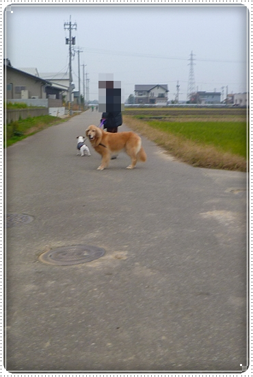 2011,11,28お散歩8