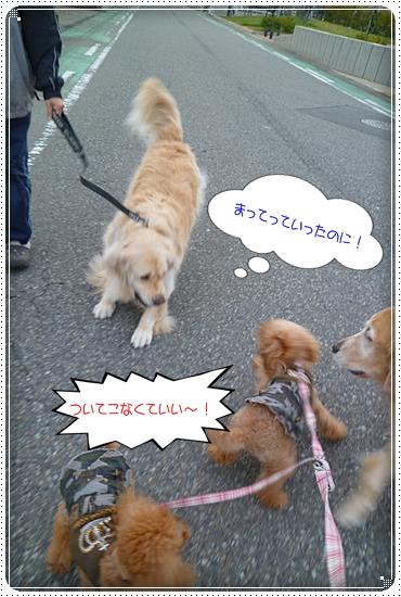 2011,11,30お散歩6