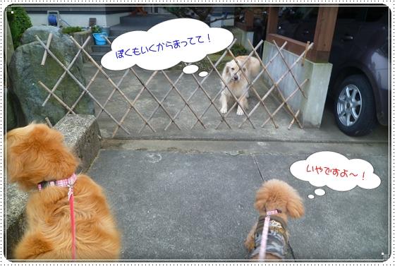 2011,11,30お散歩5