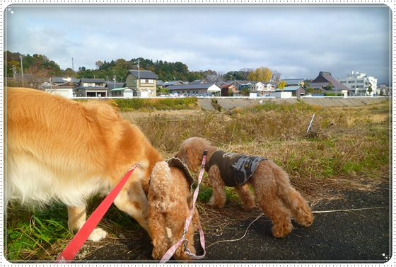 2011,11,30お散歩2