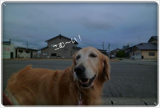 2011,11,30お散歩4
