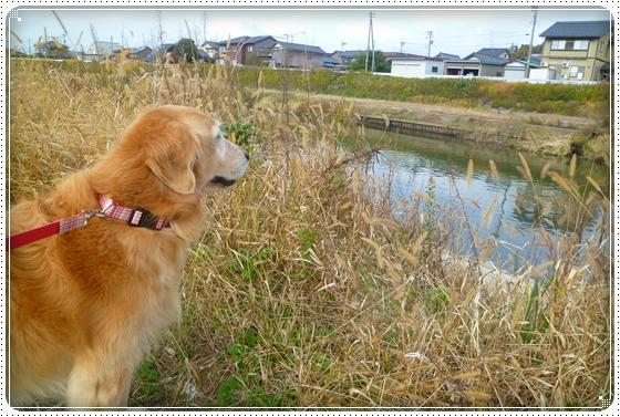 2011,11,30お散歩3