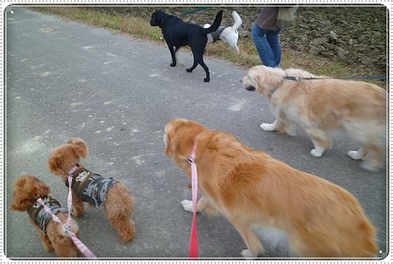 2011,11,30お散歩10