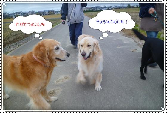 2011,11,30お散歩7