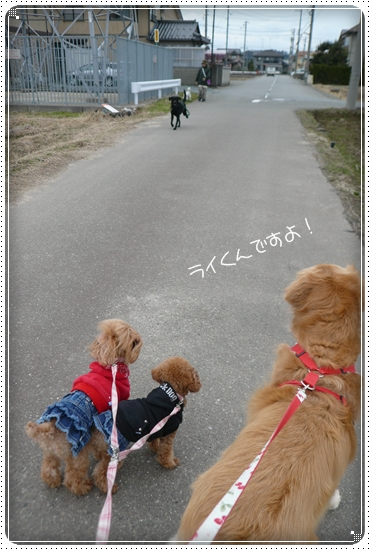 2012,1,16お散歩2