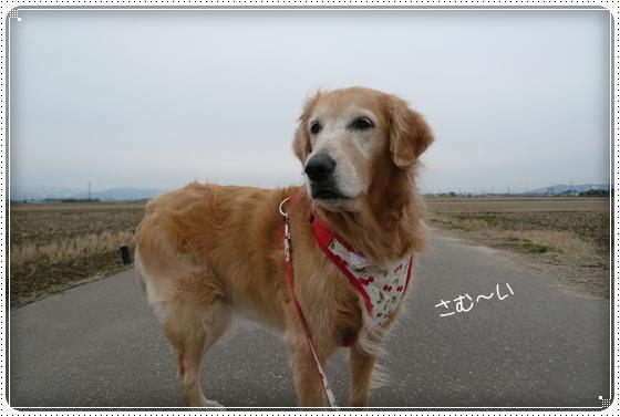 2012,1,16お散歩1