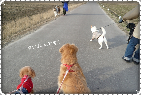 2012,1,17お散歩6