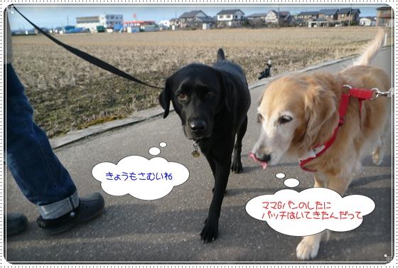 2012,1,17お散歩4