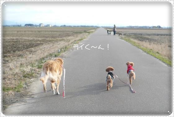 2012,1,17お散歩3