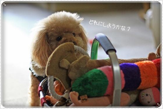 2012,1,23お散歩3