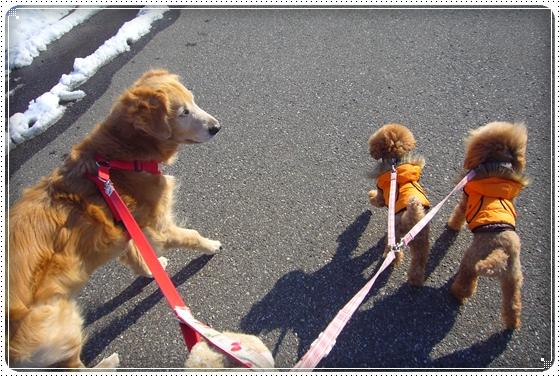 2012,1,28お散歩1