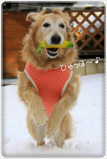 2012,1,31お庭遊び1
