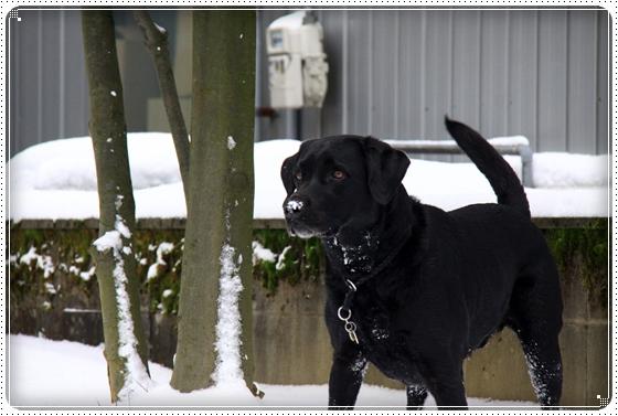 2012,2,2雪6