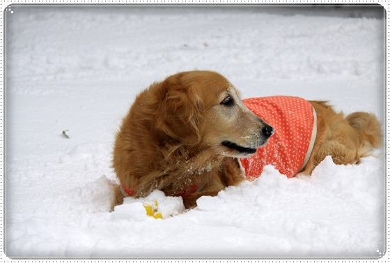2012,2,2雪3