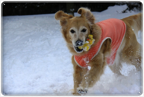 2012,2,2雪8