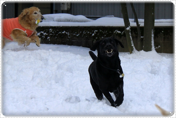 2012,2,2雪11