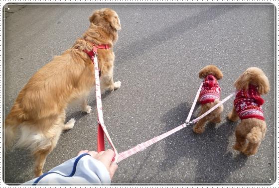 2012,2,16お散歩2