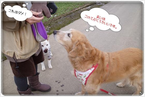 2012,2,16お散歩7