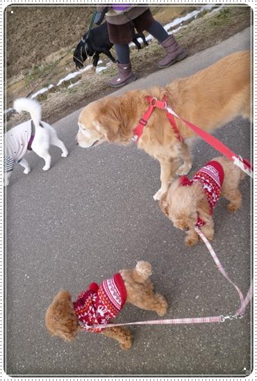 2012,2,16お散歩8