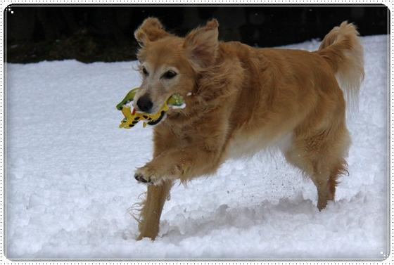 2012,2,18雪6