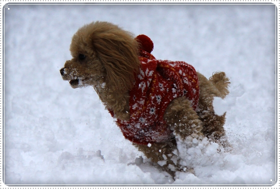 2012,2,18雪8