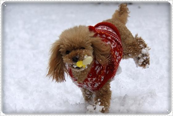 2012,2,18雪12