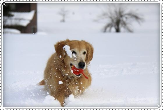2012,2,19雪遊び5