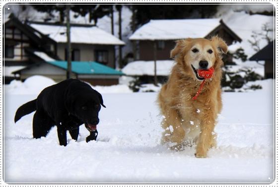 2012,2,20雪遊び3