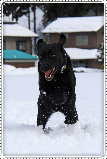 2012,2,20雪遊び5
