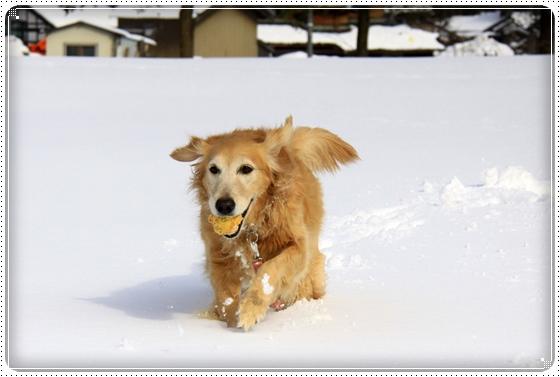 2012,2,20雪遊び2