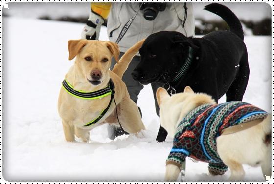 2012,2,20雪遊び12