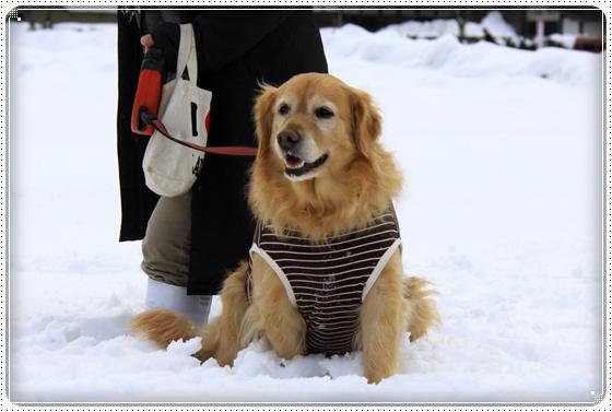 2012,2,20雪遊び10